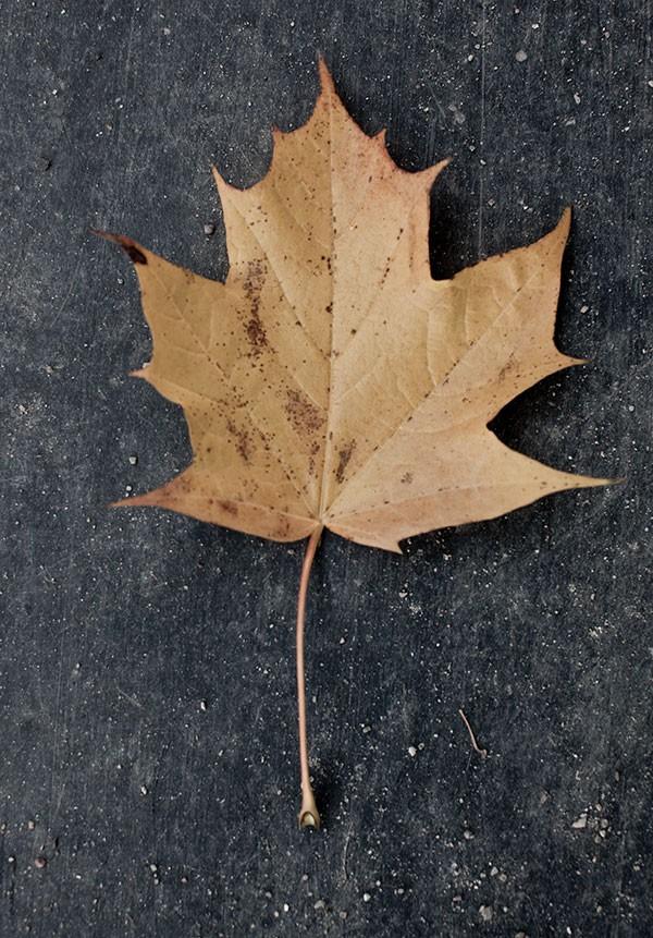 Autumn-for-Menu