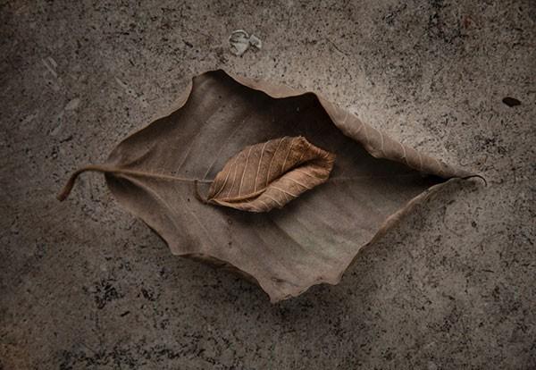 Leaves-for-Menu