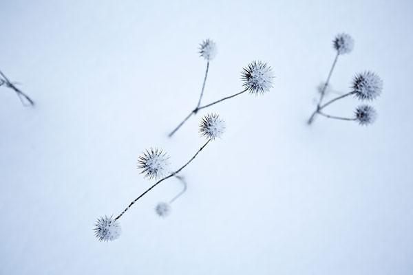 Winter-for-Menu-04