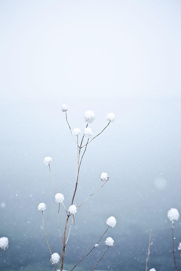 Winter-for-Menu02